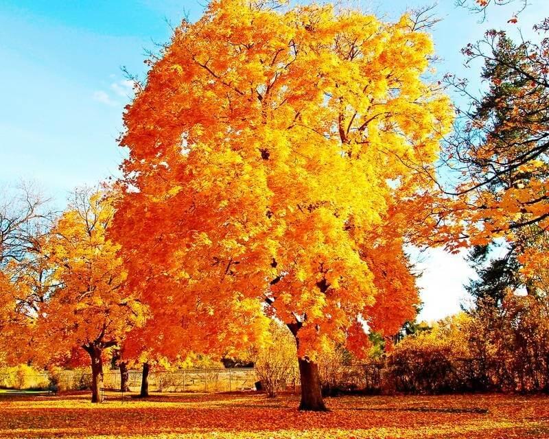Осенний бал стихи и фото