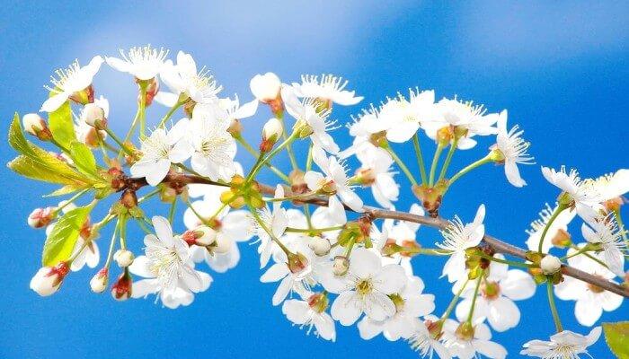 Апрель - апрельская веточка яблони