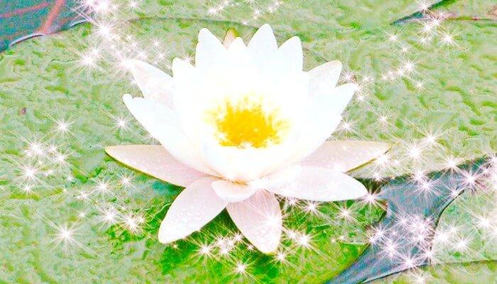 Мама эта белая лилия тебе со стихом на день рождения!