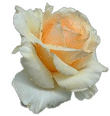 Большой искрящийся бутон белой розы к стихотворению Совет да Любовь