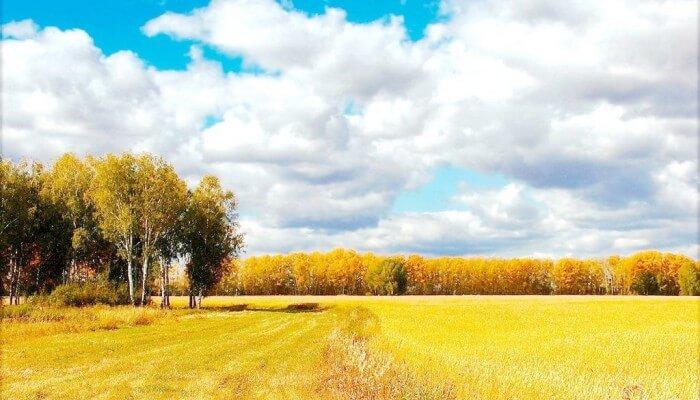 Пейзаж Осень Золотая